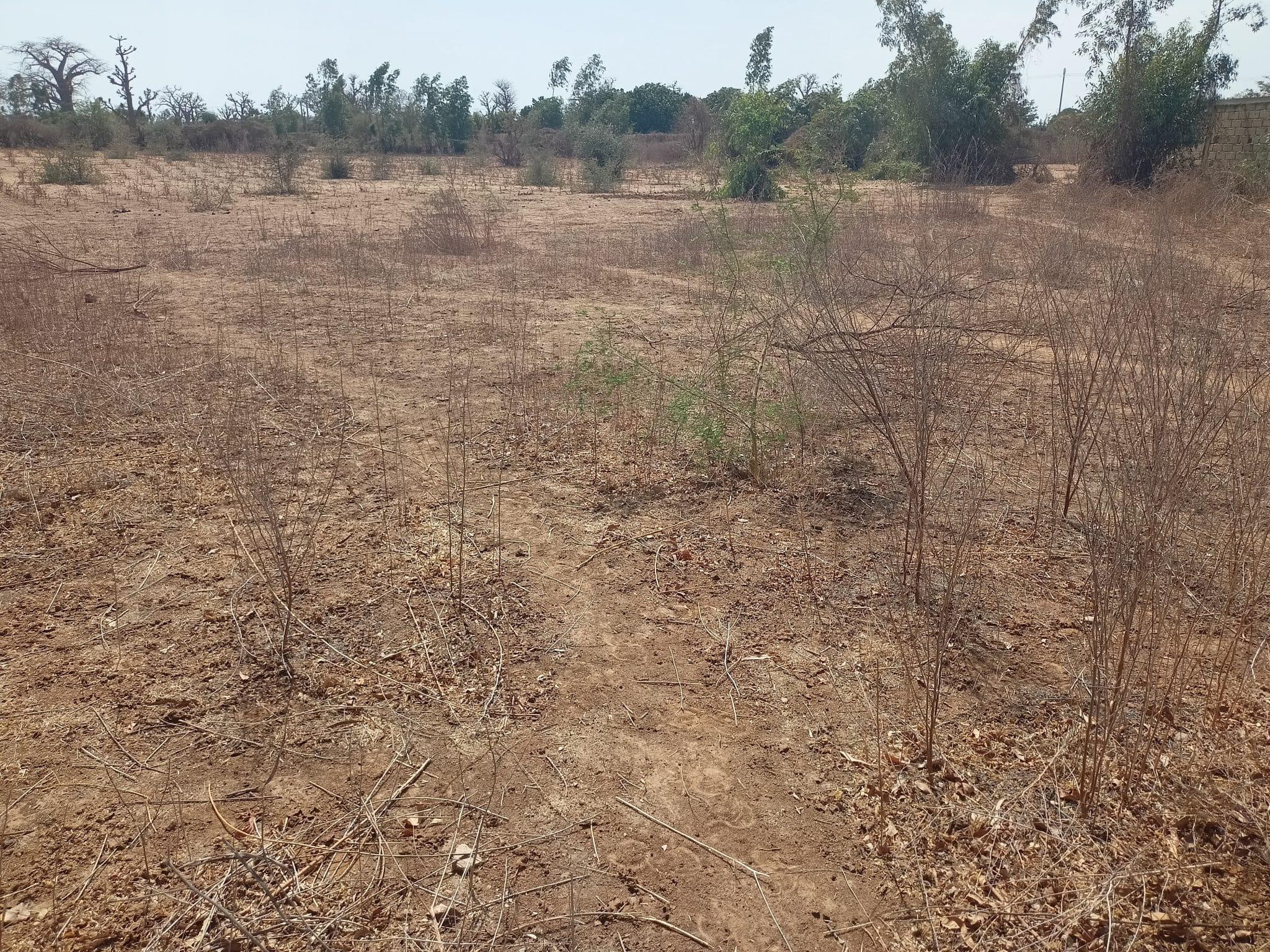 Terrain à vendre Kirène 0.5 hectares RN2 Thies Senegal