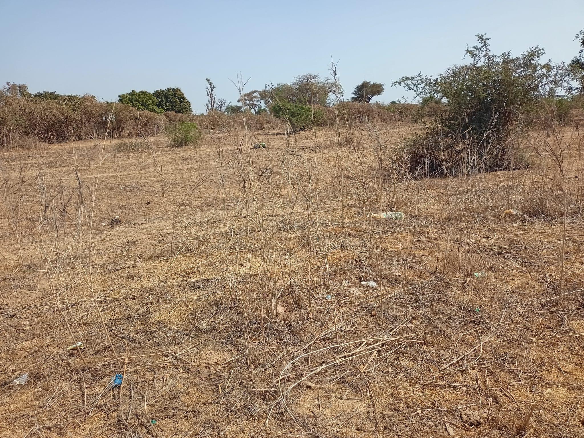 Un terrain de 1,7 hectare à vendre (Kirène – Sindia)